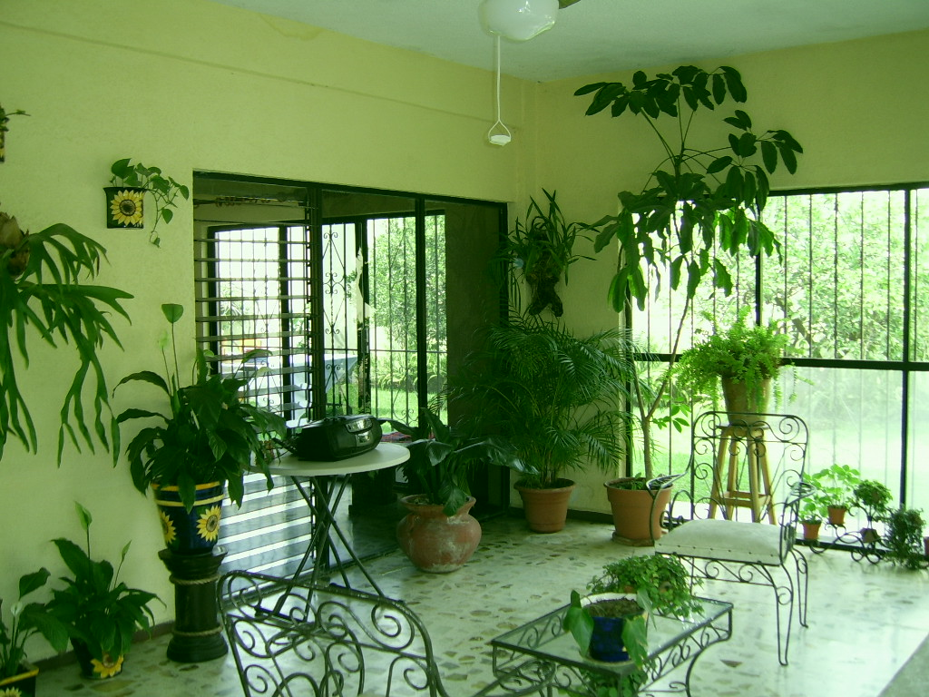 Plants inside rooms for Living room with indoor plants