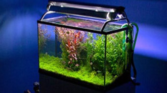 Aquariums that turn heads