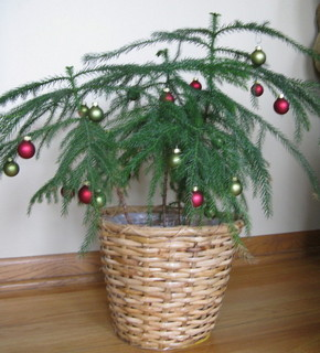 houseplant christmas tree