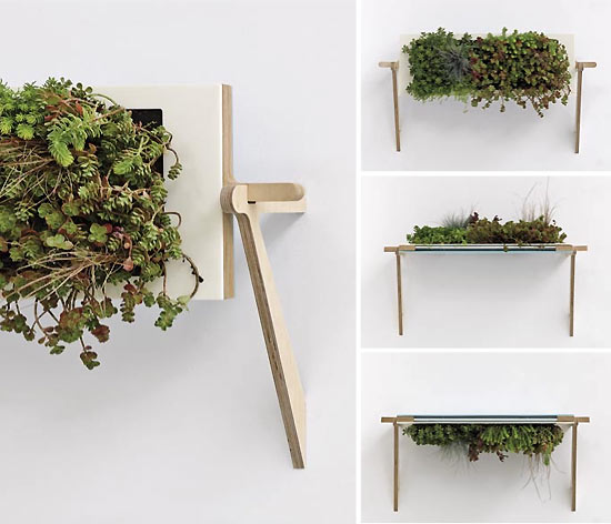 Indoor plants that purify air in living spaces for Indoor nature design challenge