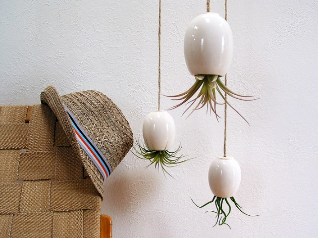 Indoor plants that purify air in living spaces for Arrosage plante interieur