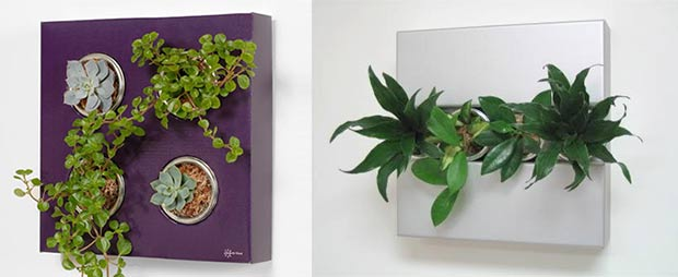Plant Wall Art indoor plants that purify air in living spaces