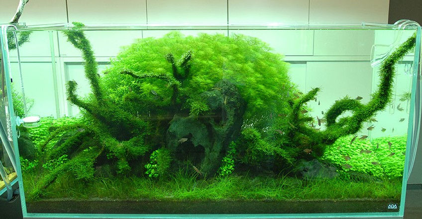 Amano aquascape interior design ideas - Design aquasacpe ...