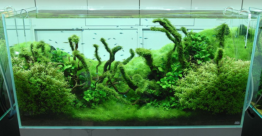 Nature aquariums and aquascaping inspiration - Gallery aquascape ...