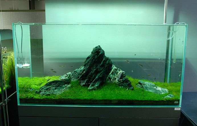 Nature aquariums and aquascaping inspiration Aquarium landscape