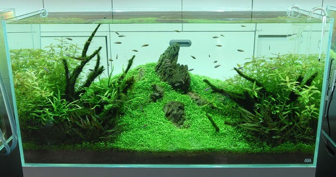Amano Fish Tank : Enjoy this video that shows how Takashi?s nature aquarium was made: