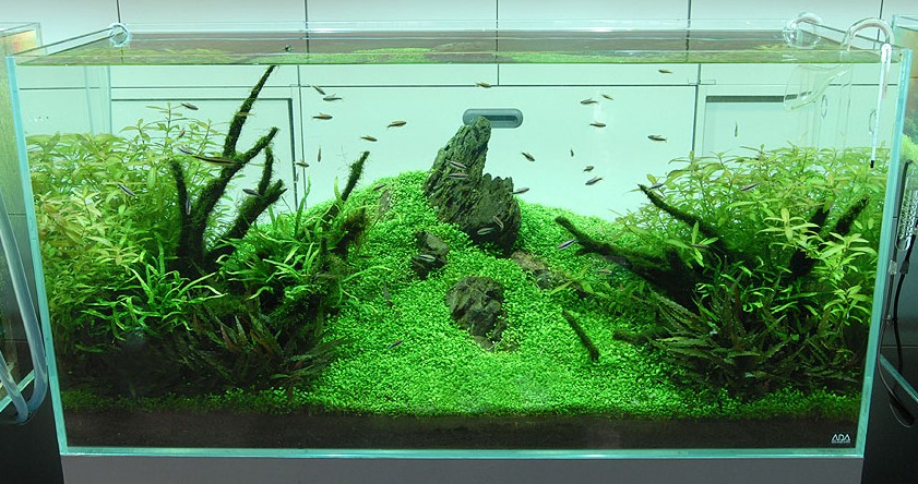 High Quality Nature Aquariums And Aquascaping Inspiration