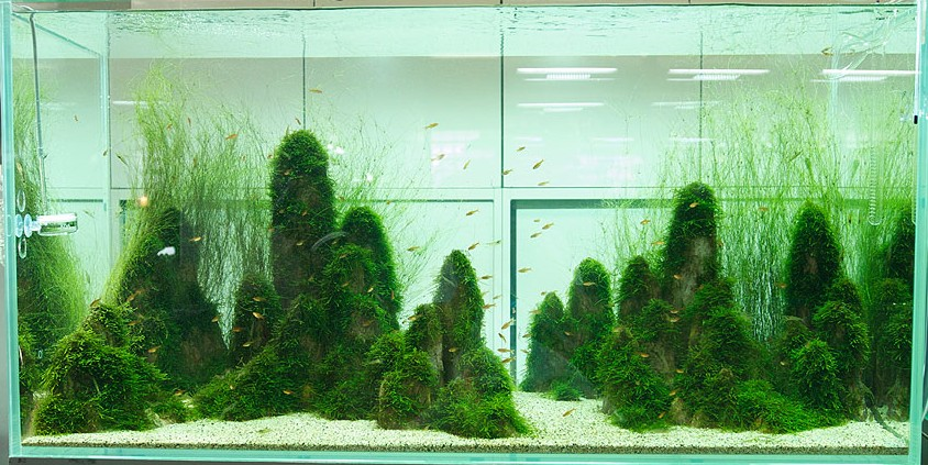 Japanese aquascaping interior design ideas - Design aquasacpe ...