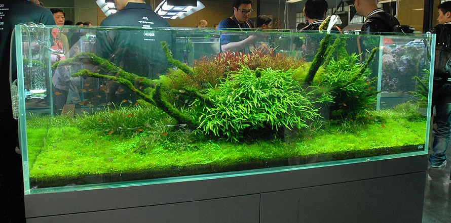 Exceptional Nature Aquariums And Aquascaping Inspiration