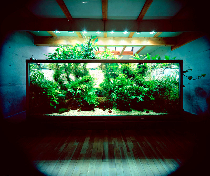 Aquascaping Ideas Interior Design Ideas