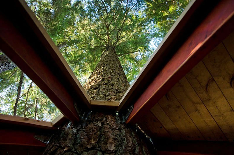 Hidden egg treehouse by joel allen for How to build a treehouse roof