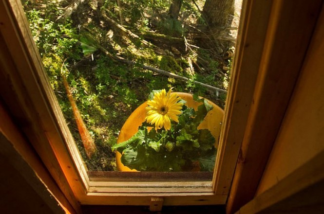 treehouse window