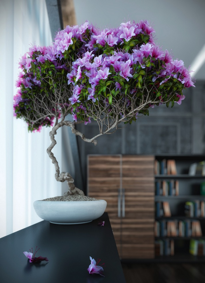 bonsai in interior settings