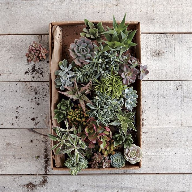 The simplest arrangements can be packed with interest too, like this selection of mini cacti, along with a few succulents thrown in to balance out the prickles!