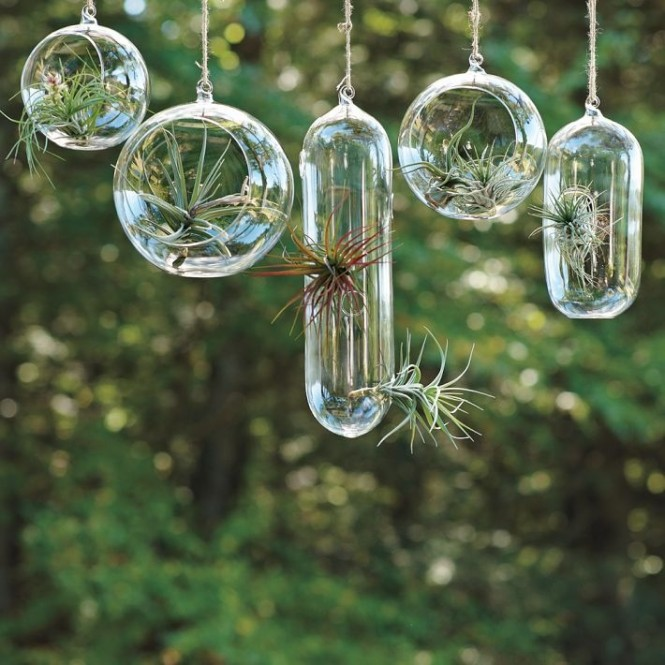 Hanging terrariums are amazing space savers, and we love the way they catch the light too. Try hanging a sequence of different vessels over a desk or dining table, or in front of a window for an extraordinary focal feature.
