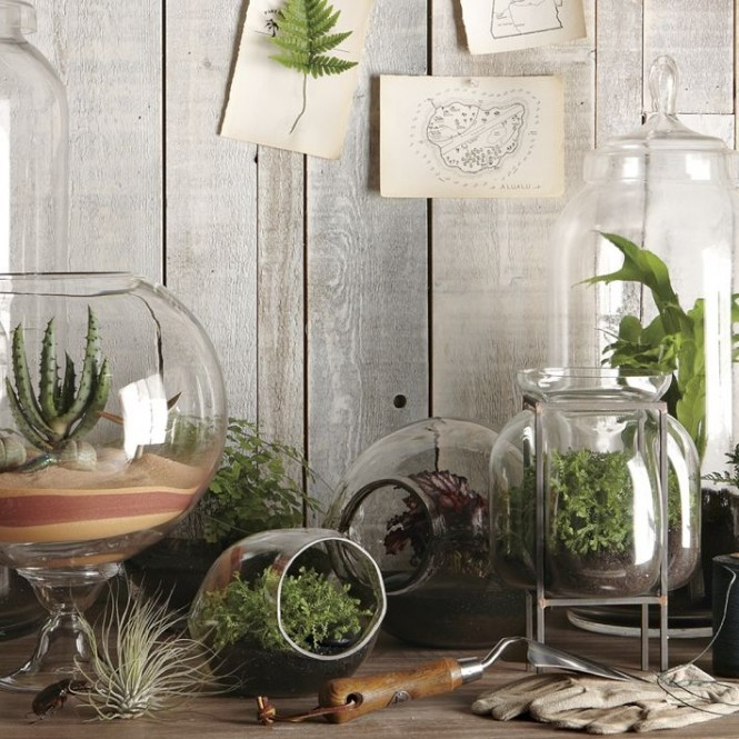 Terrariums come in all shapes and sizes, and they look great when grouped together in abundance.