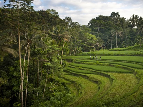 Como Shambhala Estate Bali- natural surroundings views of rice terraces