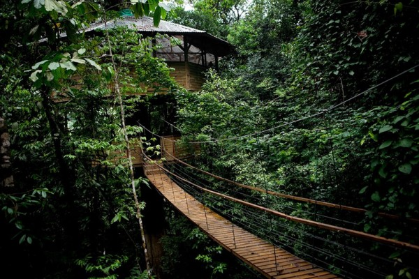 Sustainable treehouse exterior 2