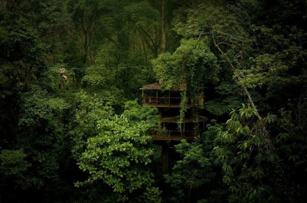 While some of the treehouses are connected by bridges, this one shows a zip line above the treeline connecting on house to the other.