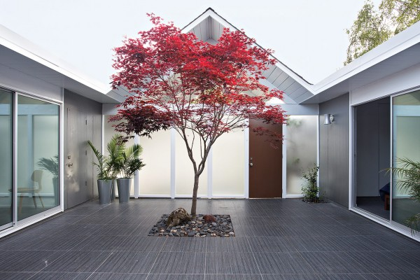 A solitary planted tree creates drama with a burst of vibrant color.