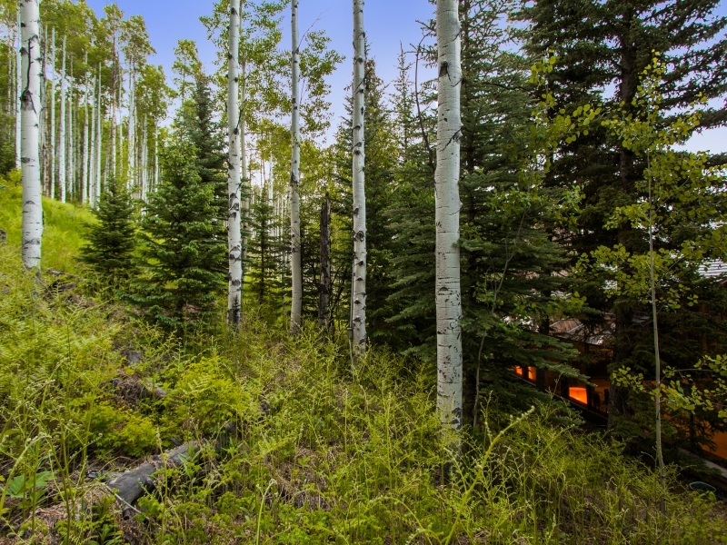 Forest Scenery - Gorgeous colorado cabin secluded among the trees