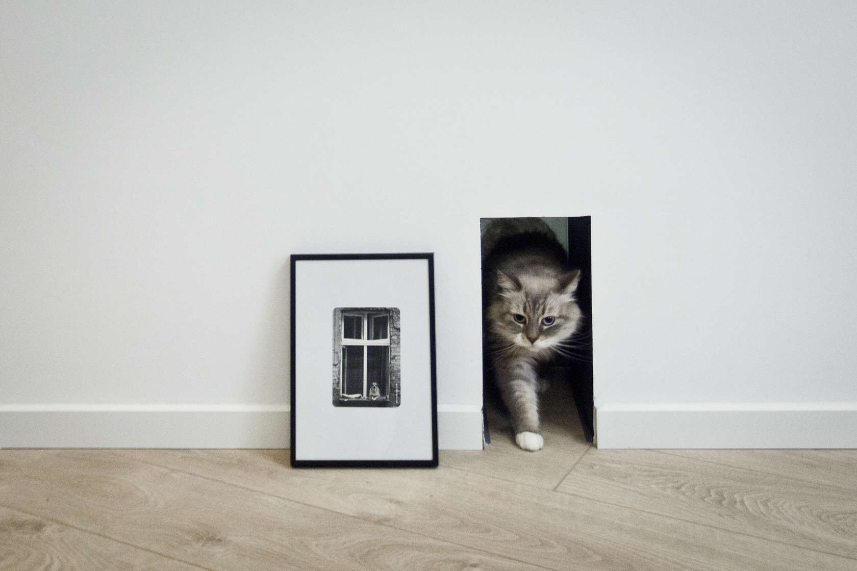 Cat Door - An old attic is transformed into a gorgeous apartment