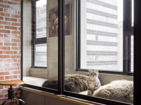 There are two cat-friendly features that particularly stand out in the loft. The enclosed window box is absolutely ideal for a curious cat perch. Streaming sunlight from outside makes a great lounging spot for kitty and human alike while adding an extra layer of insulation for the indoor area. The other obvious cat feature is an adorable cat door that lets the cats go in and out as they please - until it's closed and they can be contained.