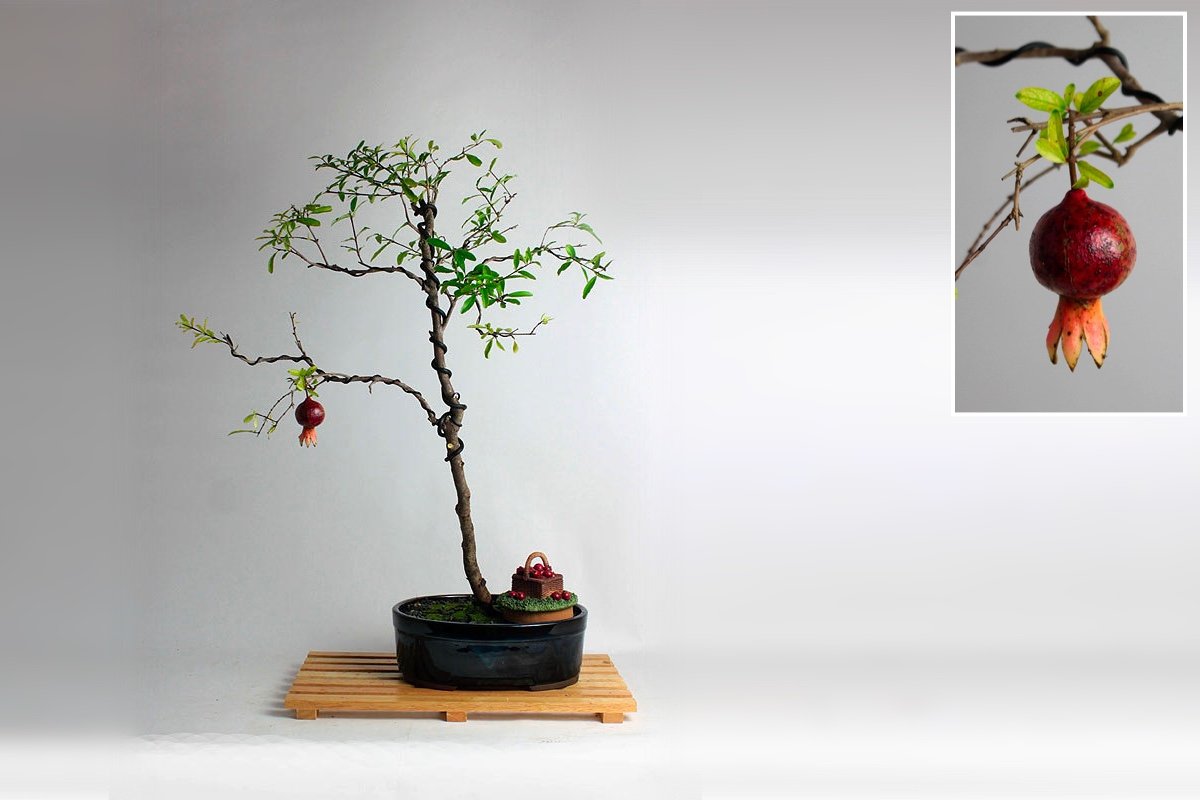 Dwarf Pomegranite Bonsai tree