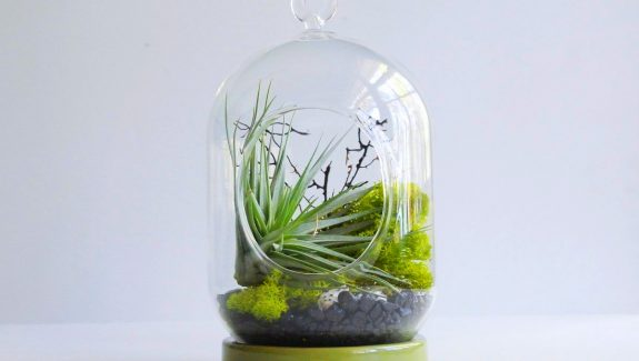 Product Of The Week: A Beautiful Terrarium