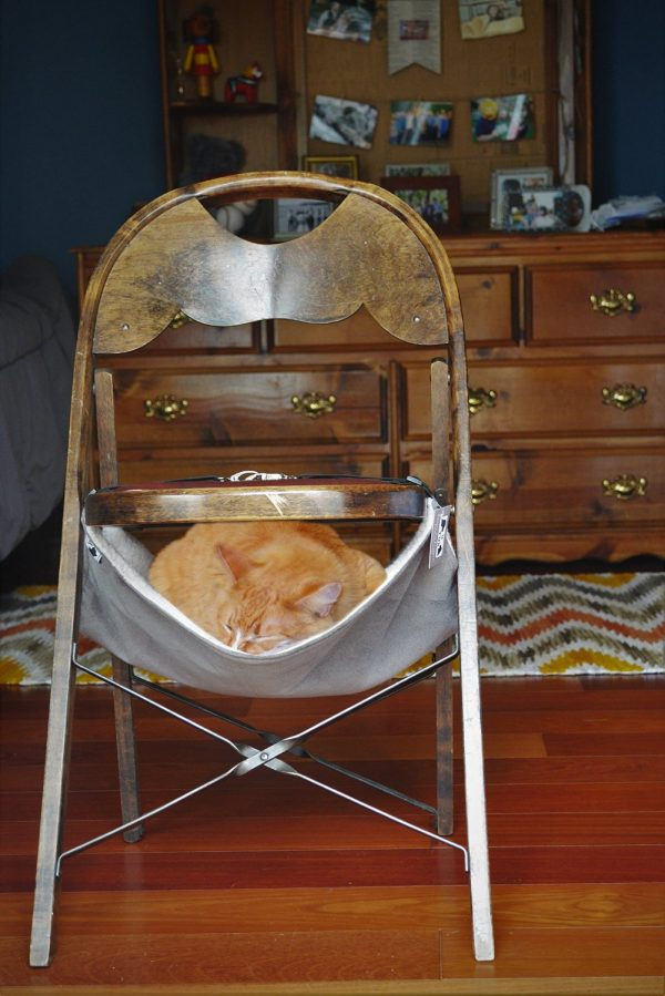 Stylish Cat super stylish cat houses, furniture & home essentials for the