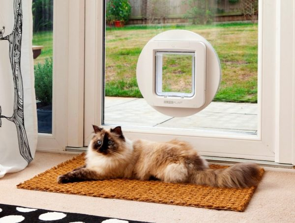 BUY IT & Super Stylish Cat Houses Furniture \u0026 Home Essentials For The ... Pezcame.Com