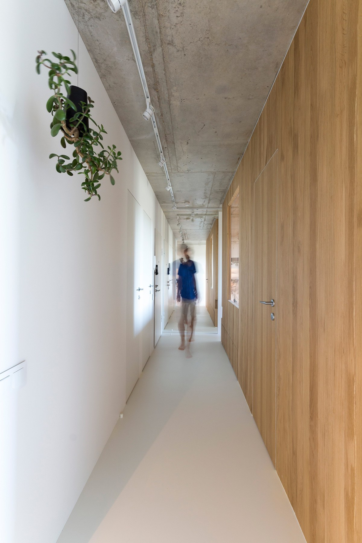 Minimal Hallway Houses Under Sqm Living Hanging Plants White And Wood Walls - Super small studio apartment under 50 square meters includes floor plan