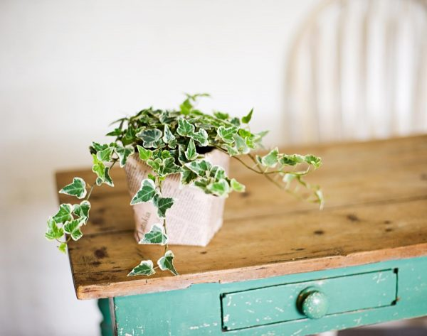 32 beautiful indoor house plants that are also easy to for Easy to maintain bushes