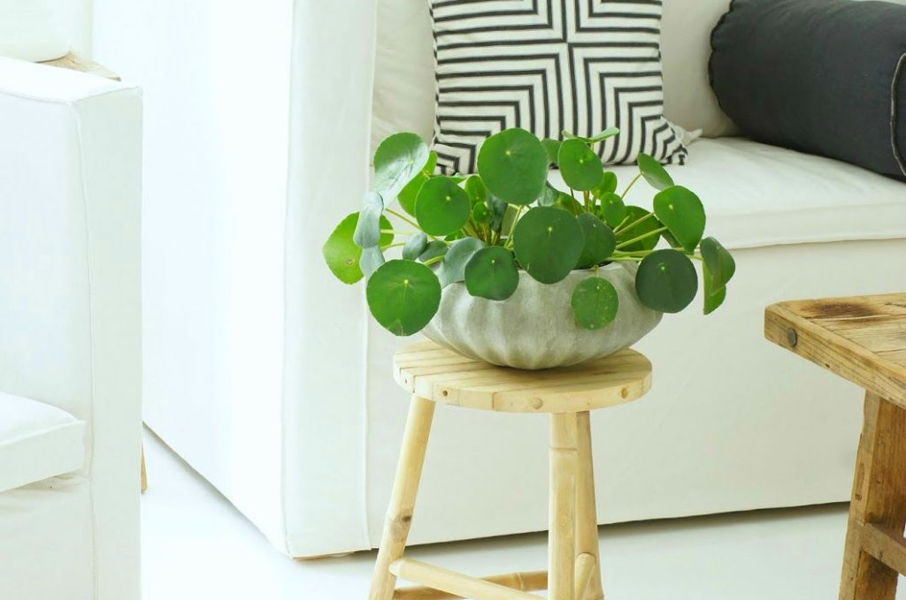 Beautiful Indoor House Plants That Are Also Easy To Maintain