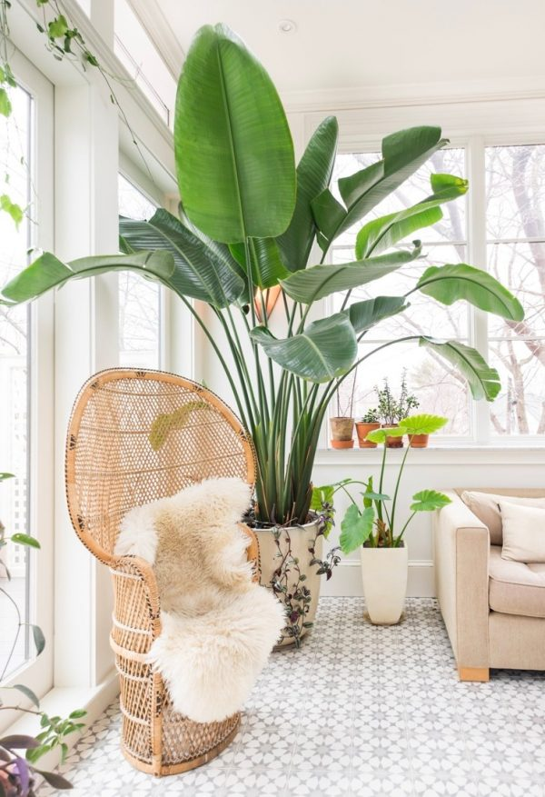 32 beautiful indoor house plants that are also easy to maintain - Tall house plants ...