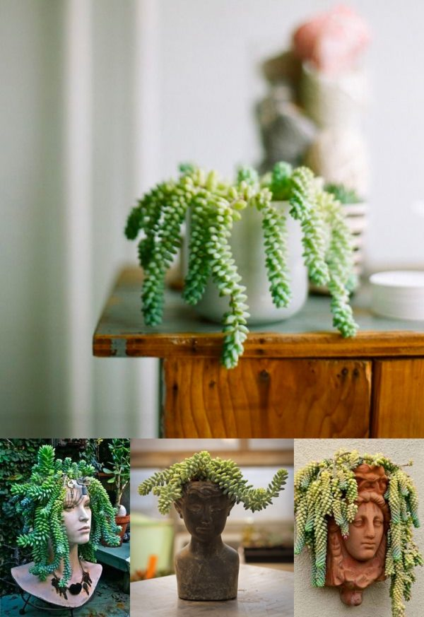32 beautiful indoor house plants that are also easy to maintain - Interesting house plants ...