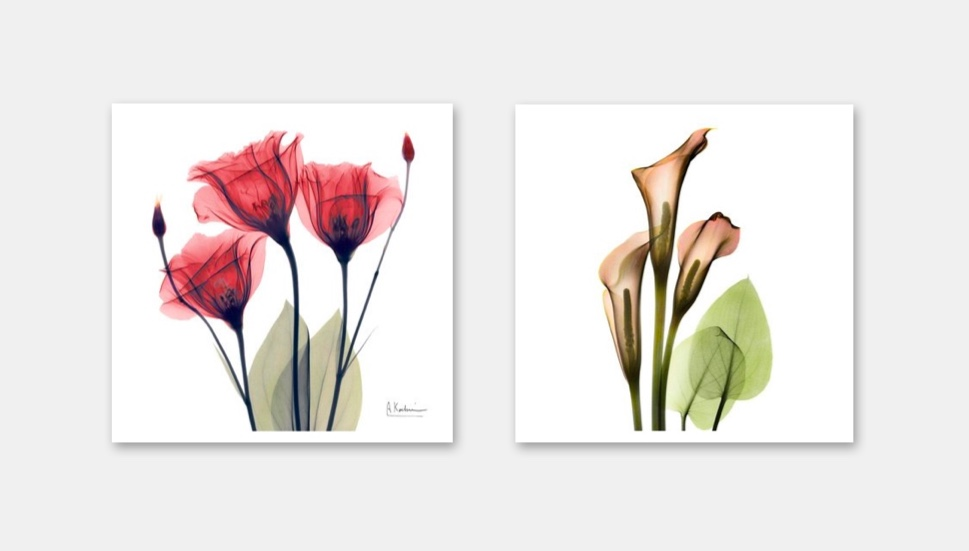 Exquisite Floral X Ray Art Prints By Albert Koetsier