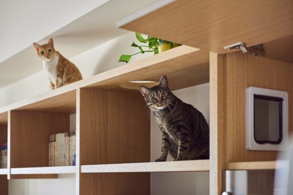 But in this home a large shelving unit acts as bookshelves entertainment center and stylish cat furniture all in one