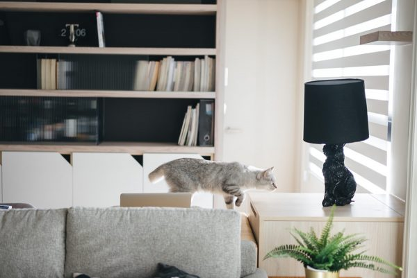How To Make A Cat Happy: Cat Friendly Home Design – Best ... Cat Friendly Home Design on copy cat chic nursery room design, cat shelves, cat bathroom accessories, cat room house design, cat condo from old dresser, cat house home design, cat staircase design, cat chair, cat wall walks designs, cat interior design, cat from home, cat stairs, cats in the kitchen design,