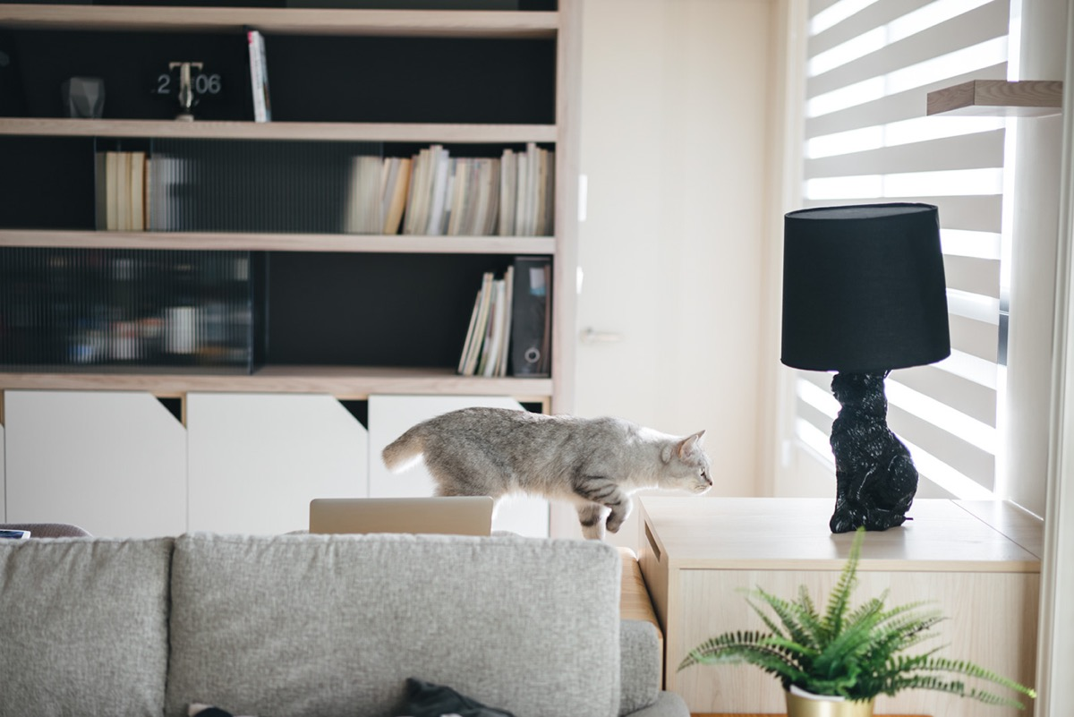 How To Make A Cat Happy: Cat Friendly Home Design images 16