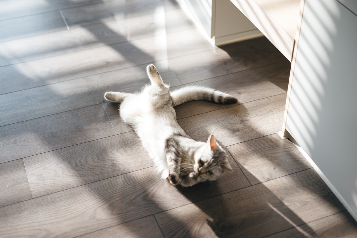 How To Make A Cat Happy: Cat Friendly Home Design images 23