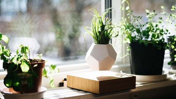 Product Of The Week: Lyfe Floating Planter