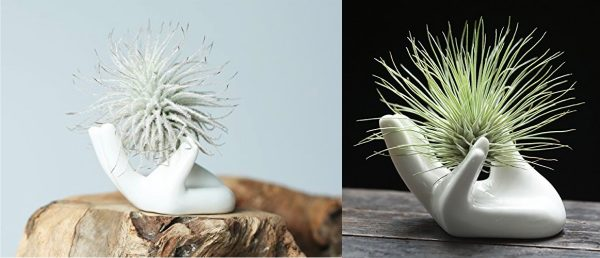 Product Of The Week: Beautiful Air Plant Holders