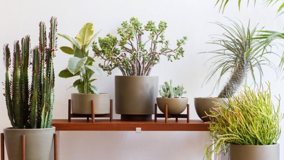 Product Of The Week: Beautiful Plant Stands From Modernica
