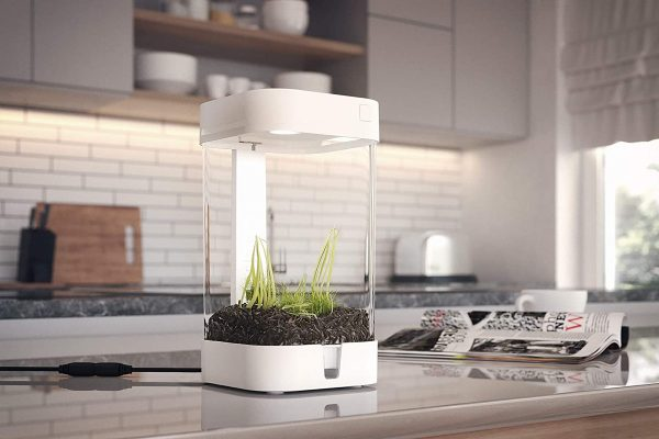 Product Of The Week: A Smart Terrarium