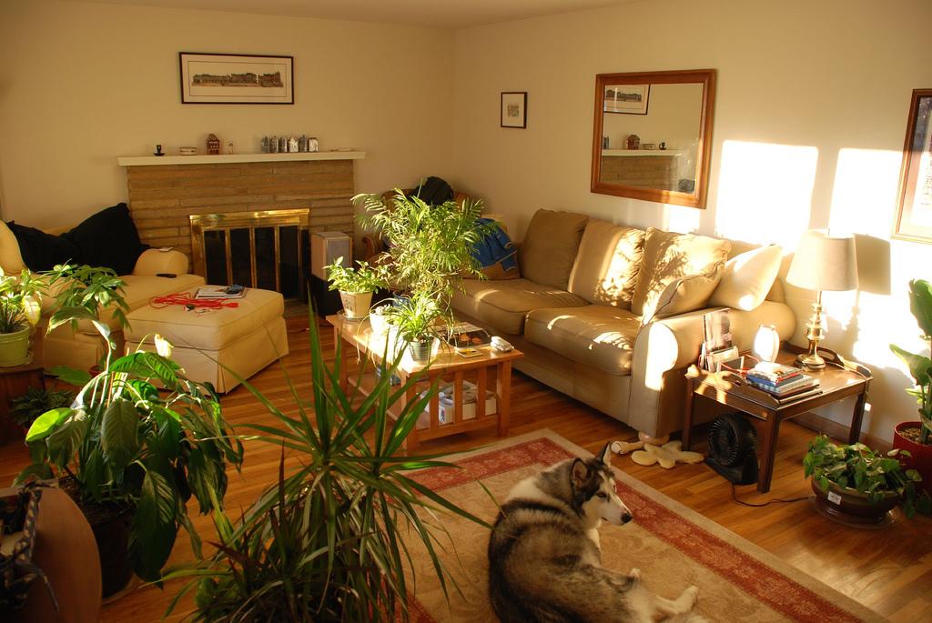 Plants inside rooms - Indoor plants decoration ideas ...