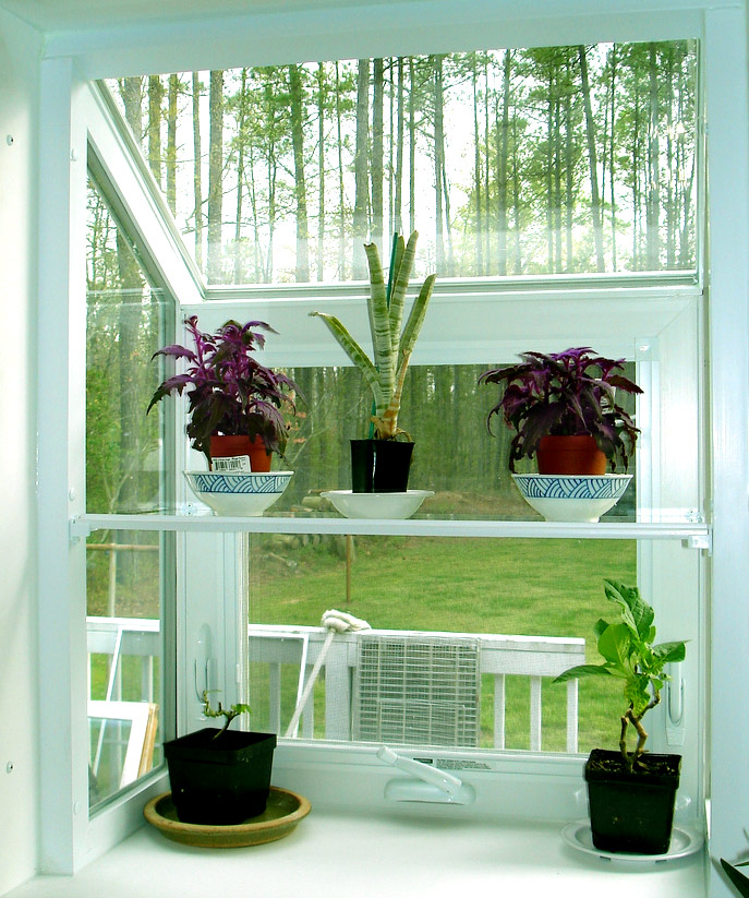 Fresh Indoor Plants Decoration Ideas For Interior Home: Plants Inside Rooms