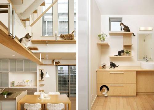 Katze-home