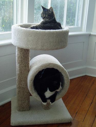 Zwilling-Katze-Möbel