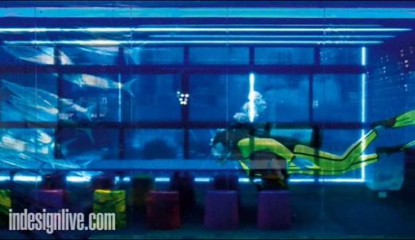 2 google-aquarium